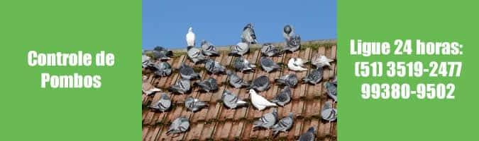 controle de pombos em porto alegre advento 24 horas dedetizadora