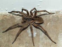 dedetização de aranhas em porto alegre 24 horas advento dedetizadora