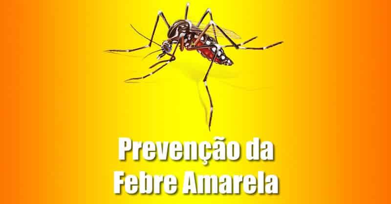 epidemia de febre amarela como combater como prevenir vacina porto alegre advento dedetizadora dedetização de mosquito