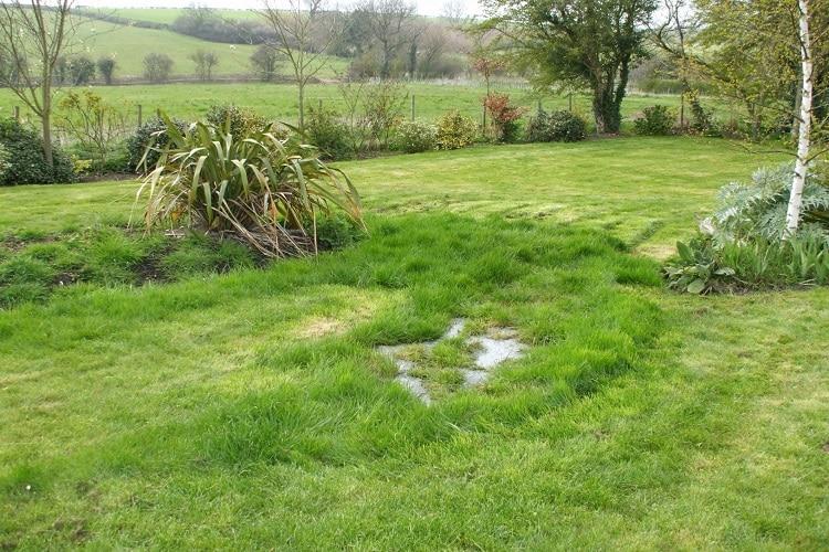 grama mais verde pode ser sinal de fossa vazando