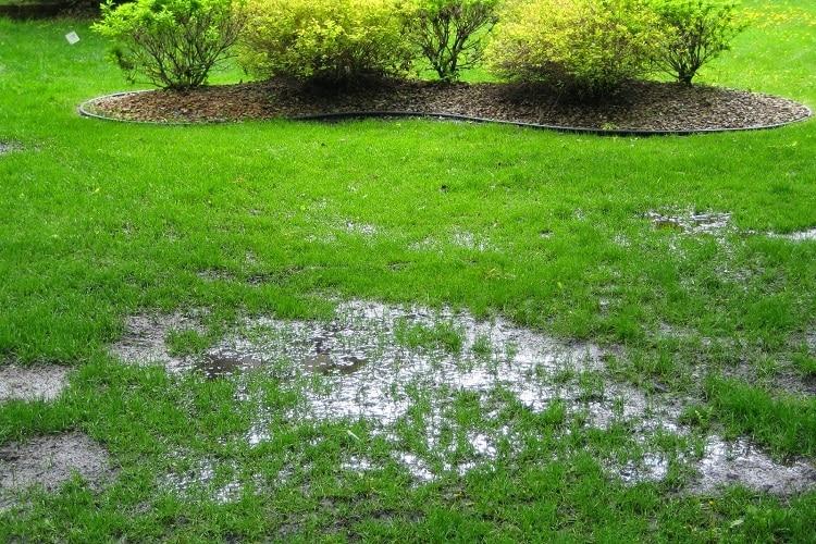 gramado encharcado e alagamentos podem indicar que a fossa está cheia