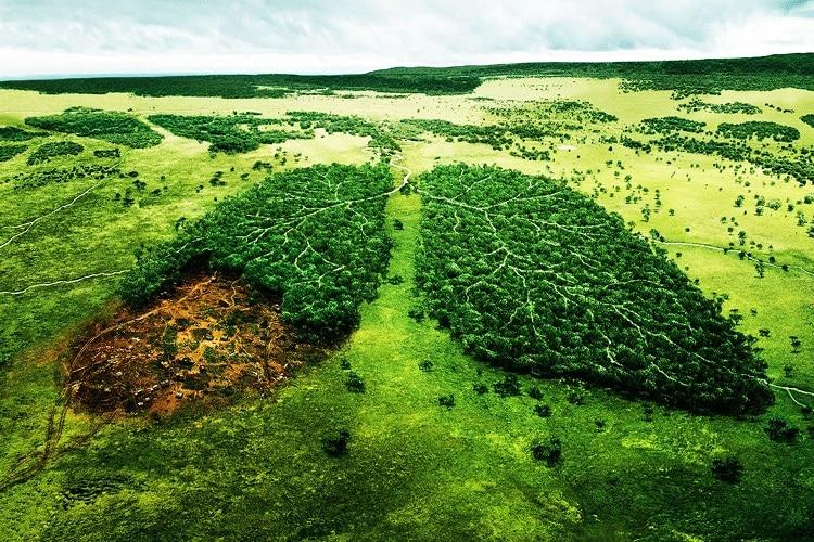 amazônia é o pulmão do mundo