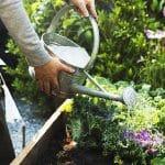 regue plantas com regador