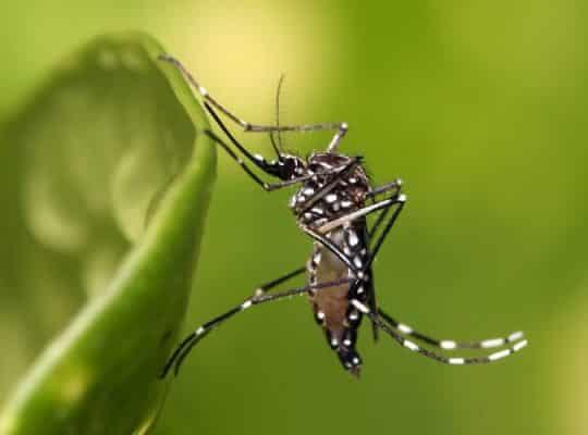 casos de dengue no rio grande do sul aumentam mais de 140% em 2019