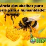 A importância das Abelhas para a natureza e para a humanidade