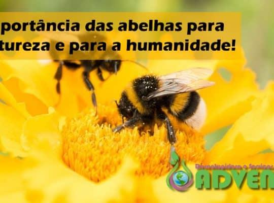 a importência das abelhas para a natureza e para a humanidade