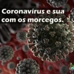 O novo coronavírus e sua relação com os morcegos