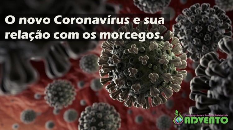 o novo coronavírus e sua ligação com os morcegos na china